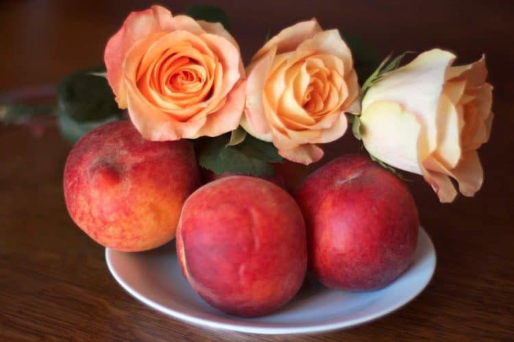 A bowl of peaches and pink roses