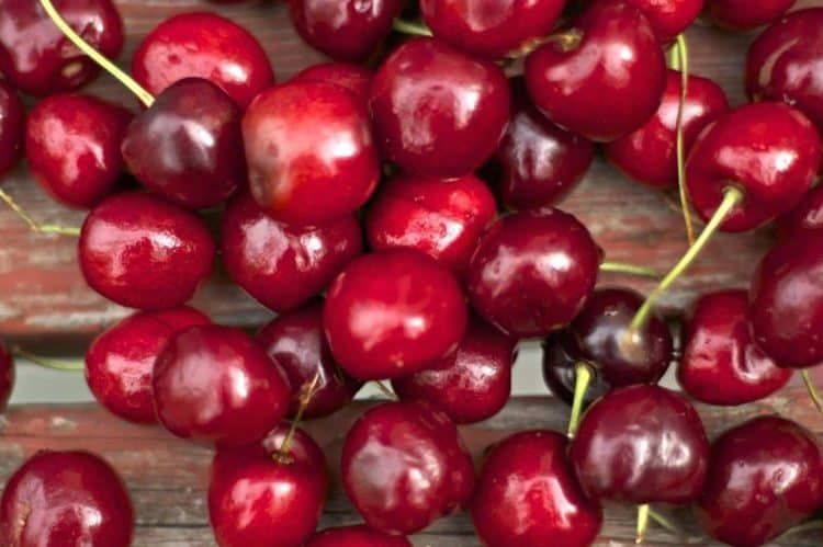 A close up of a bing cherries