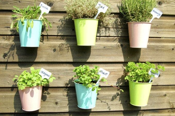 10 Reasons You Need an Herb Garden in Your Home Today
