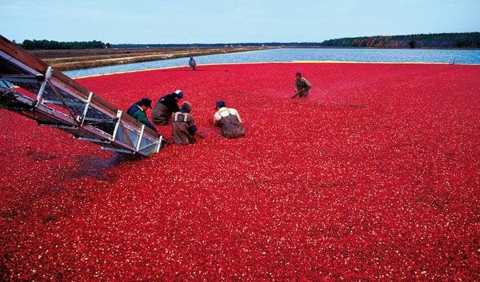 Cranberry Facts & Fun from Platter Talk