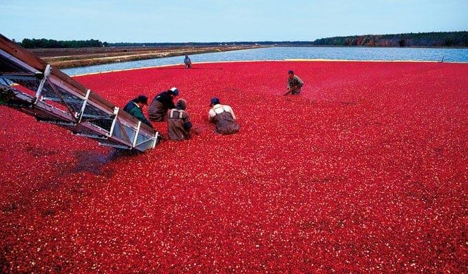 Cranberry Facts & Fun from Platter Talk