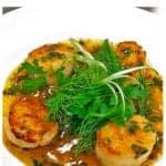Bowl of seared sea scallops
