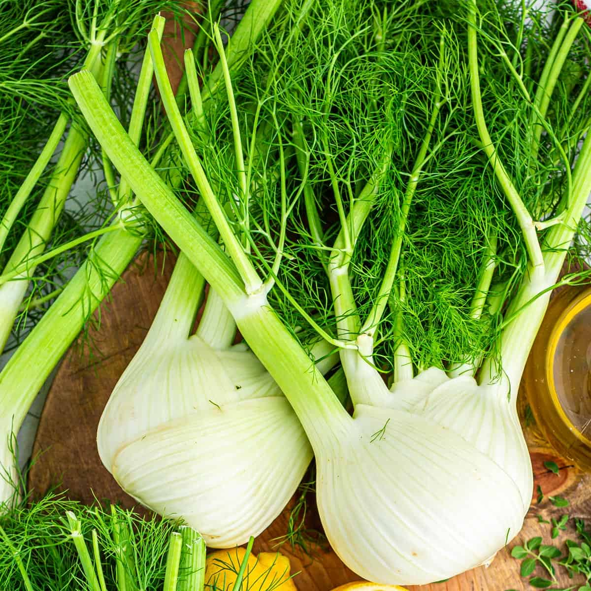 Two bulbs of fresh fennel with their fronds