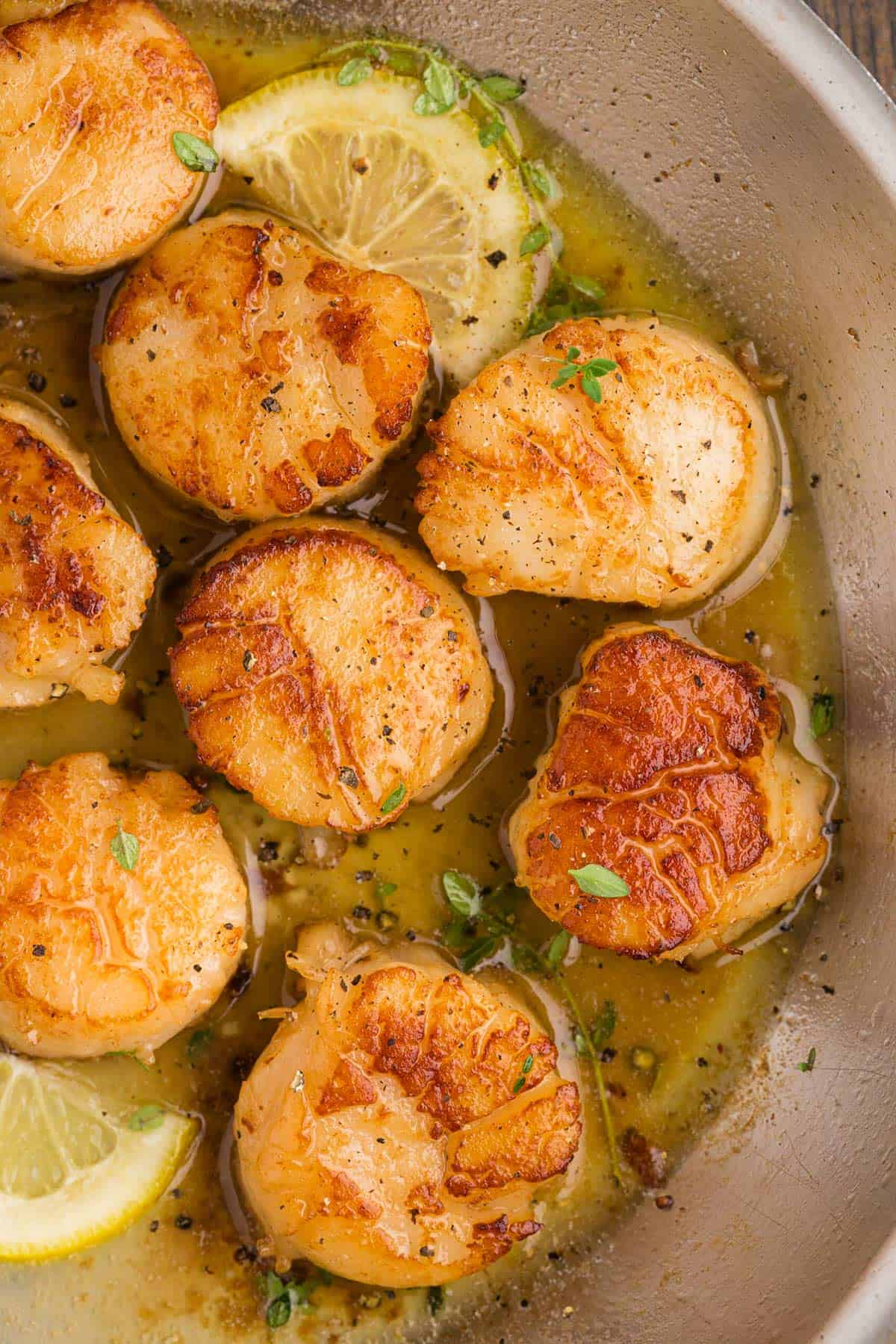 A bunch of sea scallops being cooked in a pan.